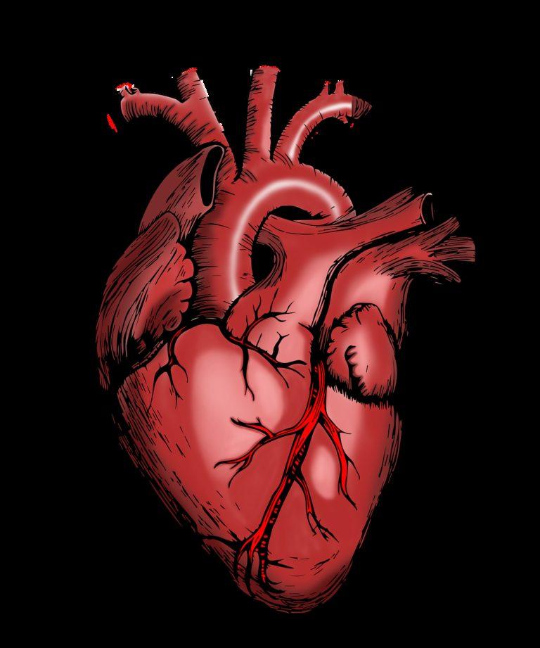 heart, nurse, health